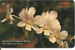 CARTE-MAGNETIQUE-SINGAPOUR-10$--ORCHIDEES BLANCHES-BE - Fleurs