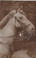 AR77 Animals - White Horse's Head - Horses