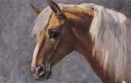 AR77 Animals - Brown Horse With White Manes By A Hanstein - Tuck Oilette - Paarden