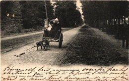 1postkaart HOELEN 1004  Capellen C1903   Attelage De Chiens- Wandeling Met 2 Trekhonden In De Cappelschestraat - Kapellen