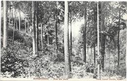 Ronquières NA10: Bois Des Rocs 1912 - Braine-le-Comte