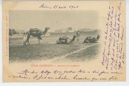 AFRIQUE - ALGERIE - TYPES ALGERIENS - Groupe De Chameaux (postée à BONE En 1903 ) - Algérie