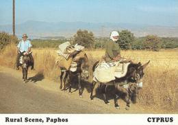 Rural Scene PAPHOS CPSM TBE - Chypre