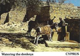 Les ânes à L'abreuvoir CYPRUS CPSM TBE - Chypre