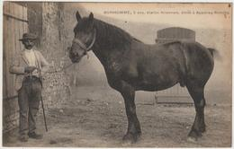 BONHOMME, 5 Ans, étalon Nivernais. élevé à Apponay-Rémilly - France