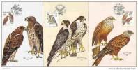 3 Cartes Maximum 2003 Oiseaux Rapaces Maximum Card Birds Eagle - FDC