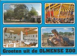 8Eb-509: Groeten Uit De Olmense Zoo 2491 Olmen-Balen... De Postzegel Is Al Weg... - België