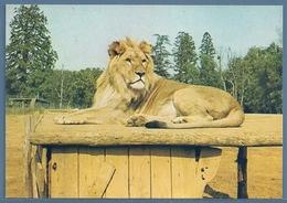 • CPM - RÉSERVE AFRICAINE DE THOIRY-en-YVELINES - LION - Lions