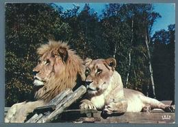 • CPM - RÉSERVE AFRICAINE DE THOIRY-en-YVELINES - LION ET LIONNE - Lions