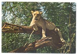 LIONS - Lions