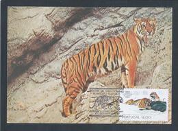 Siberian Tiger.Panthera Tigris Altaica.Postal Máximo Triplo.Jardim Zoologico Lisboa.Sibirischer Tiger.Siberische Tijger. - Postzegels