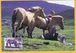 Faroe Islands 1993;  The Original Faroe Horse, Maximum Card - Faroe Islands