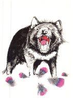 (678) Australia - Tasmanian Devil - Animaux & Faune