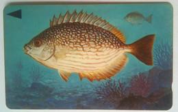 39BAHQ 25 Units Fish - Bahrain