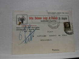 SAONARA   --- PADOVA  ---  DITTA DAINESE  LUIGI  & FRATELLI FU ANGELO  --  --VIVAI PIANTE - Padova (Padua)