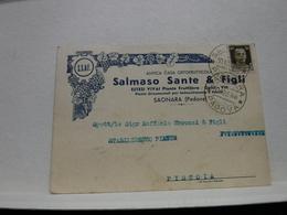 SAONARA   --- PADOVA  ---  SALAMSO SANTE  & FIGLI  -- CASA ORTOFRUTTICOLA - Padova (Padua)