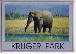 AFRICAN ELEPHANT KRUGER PARK PHOTO SAFARI  NICE STAMP - Elephants