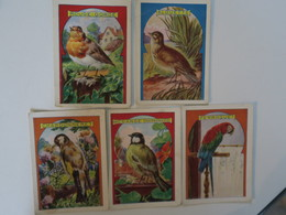 CH - Chromo - Lot De 5 - Theme Oiseaux  - Hachette - Rouge Gorge - Chardonneret - Alouette - Perroquet - Mesange - Cromos