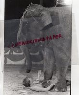 87 - LIMOGES - CIRQUE PINDER JEAN RICHARD- ELEPHANT -DRESSUSE CHRISTINA MEYER - 1985 PHOTO ORIGINALE - Mestieri