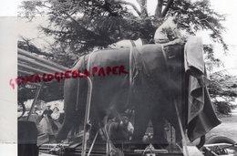 37 - TOURS- CATHEDRALE TRANSPORT ELEPHANT SCULPTURE - PHOTO ORIGINALE JEAN BOURGEOIS - Luoghi