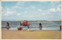Paardevisser, Garnaalvissers, Pêcheurs De Crevettes, Oostduinkerke ? (pk49944) - Oostduinkerke