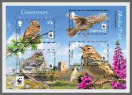 H01 Guernsey 2017 WWF Meadow Pipit Birds MNH Postfrisch - Guernsey