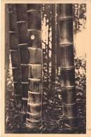 PLANTES - BAMBOUS Géants PUBESCENS ( Domaine De Prafrance Par GENERARGUES (30) - CPA - Gard - Bäume