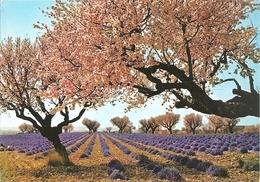 Lavandes Et Amandiers En Fleurs Dans Les Alpes De Provence - éd. MAR / IRIS N° 10958 (circ. 1977) - Provence-Alpes-Côte D'Azur