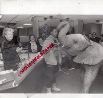 38- 73-74- GRENOBLE- VEUREY VOROIZE- ELEPHANT DU CIRQUE RANCY INTERIEUR LE DAUPHINE LIBERE LE 28-12-1983 - Métiers