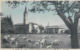 04.  ST ANDRE LES ALPES.  L EGLISE.   MOUTONS - Other Municipalities