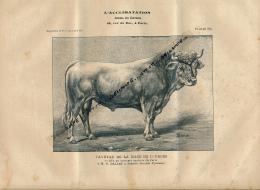 1907 : Taureau, RACE DE LOURDES, Premier Prix à Paris, Séméac, Planche Du Journal Des Eleveurs L'Acclimatation - Animals