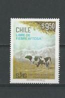 Chili: 558 ** Bovins - Vaches