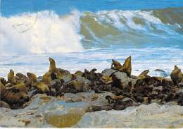 NAMIBIE Namibia ( SWA ) Seals At CAPE CROSS / Phoques / Dichtungen / CPSM GF 1986 - Black Africa AFRIQUE Noire - Namibia