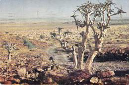 ** Lot De/of 3 Postcards Cartes *** NAMIBIE Namibia SWA - ARBRE Tree Arbre Bome Boom Albero - CPSM GF Africa AFRIQUE - Namibia