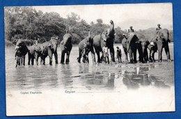 Ceylon Elephants - Sri Lanka (Ceylon)