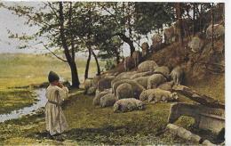 AK 0021  Balkan - Schafhirte / Verlag Römmler & Jonas Um 1910-20 - Europe
