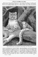 L'ONCE Ou PANTHERE DES NEIGES    1895 - Tiere