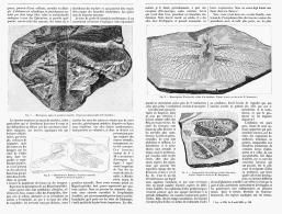 LES INSECTES FOSSILES De L'EPOQUE CARBONIFERE   1895 - Minerales & Fósiles