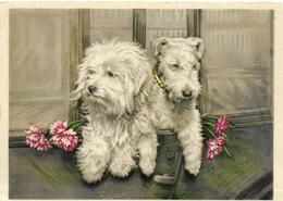 ~  JP  ~  JOLIS PETITS CHIENS   ~   ~ Sympa ~ - Dogs