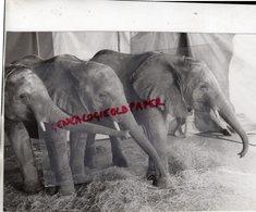 87 - LIMOGES - CIRQUE PINDER JEAN RICHARD -ELEPHANT- ELEPHANTS -PHOTO PUBLIEE PAR POPULAIRE DU CENTRE LE 15-10-1983 - Métiers