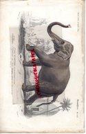 SUPERBE GRAVURE COLORISEE ANCIENNE VERS 1870- ISSUE DICTIONNAIRE HISTOIRE NATURELLE CH. D' ORBIGNY-ELEPHANT -FOURNIER - Estampes & Gravures