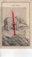 RARE GRAVURE ANCIENNE ELEPHANT- ELEPHAS  - XVIII E SIECLE - Estampes & Gravures