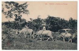 CPA - TONKIN - Buffles Au Pacage - Viêt-Nam