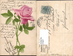 574457,Blumen Botanik Rose Pub Martin Rommel & Co. 527 - Botanik