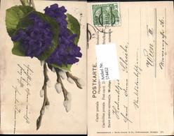 574452,Blumen Botanik Veilchen Pub Martin Rommel & Co. 571 - Botanik