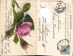 574458,Blumen Botanik Rose Pub Martin Rommel & Co. 533 - Botanik