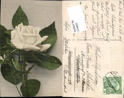 574455,Blumen Botanik Rose Pub Martin Rommel & Co. 610 - Botanik