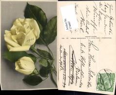 574447,Blumen Botanik Rosen Pub Martin Rommel & Co. 634 - Botanik