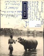 574522,Foto-AK Tiere Afrika Africa Nilpferd Schwarzes Kind Kongo - Tierwelt & Fauna