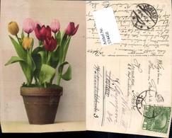 574450,Blumen Botanik Tulpen Pub Martin Rommel & Co. 800 - Botanik